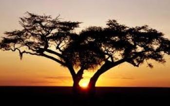 World Bank: Efforts for Better Land Governance in Africa