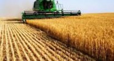Small Egypt Farmers Catch the Eye of Agribusiness: IFAD Finds Key to Success