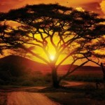 Africa Awakening: A Continent on the Rise