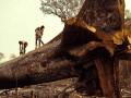 Brazil: Arrest of Fraudsters Decreases Deforestation Rate