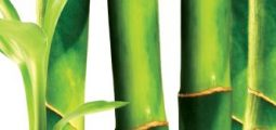 Troy Wiseman: Bamboo – A Sustainable Source of Fibre