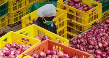 Impact at IFC: Getting to the Root of Africa's Food Challenges